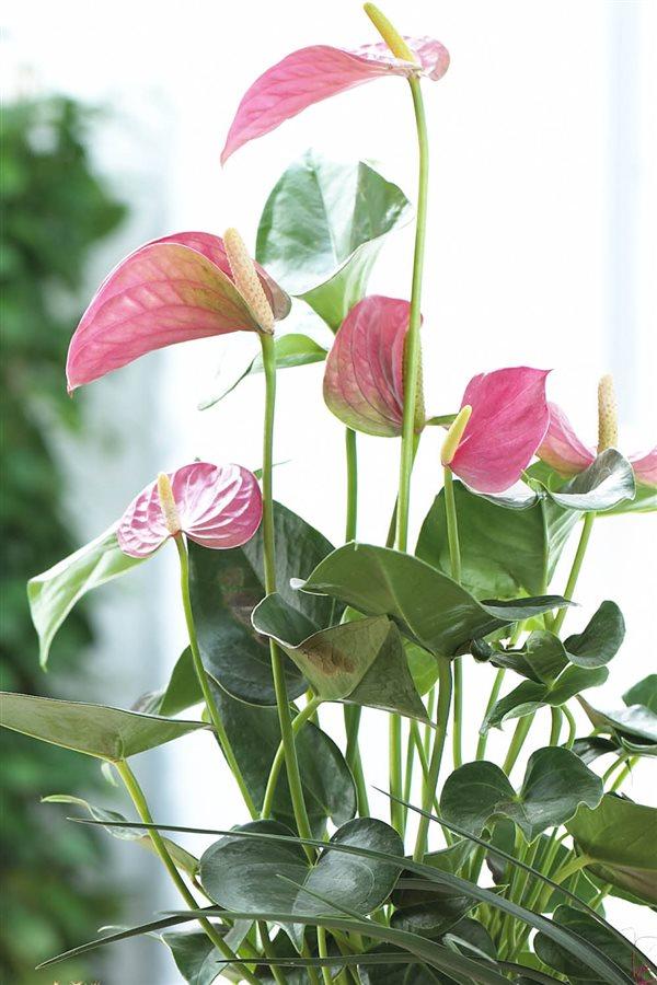 20 plantas de interior resistentes aptas para negados for Plantas para interior y exterior