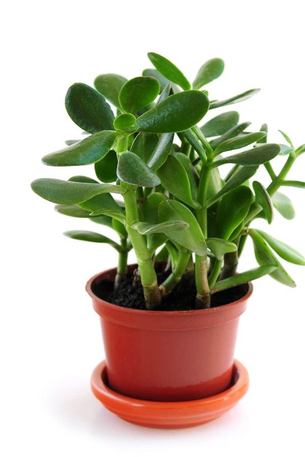 20 plantas de interior resistentes aptas para negados - Arboles de interior con poca luz ...