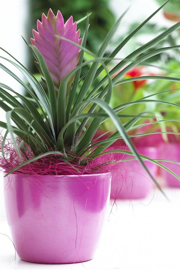 20 plantas de interior resistentes aptas para negados - Variedades de plantas de interior ...