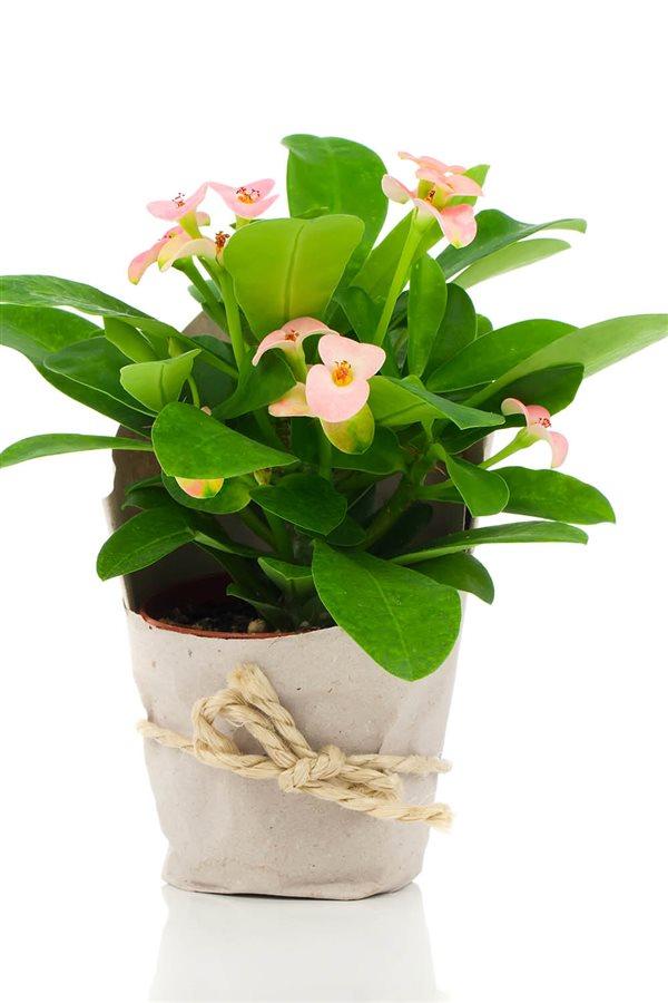20 Plantas De Interior Resistentes Aptas Para Negados - Plantas-de-interior-resistentes