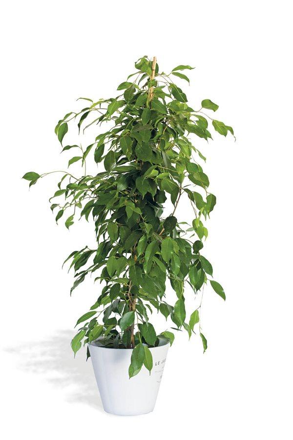 20 Plantas De Interior Resistentes Aptas Para Negados