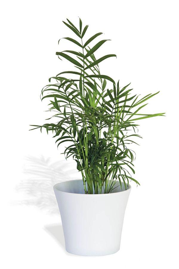 20 plantas de interior resistentes aptas para negados - Plantas de interior palmeras ...