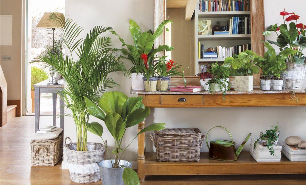 20 plantas de interior resistentes aptas para negados for Decoracion con plantas en living