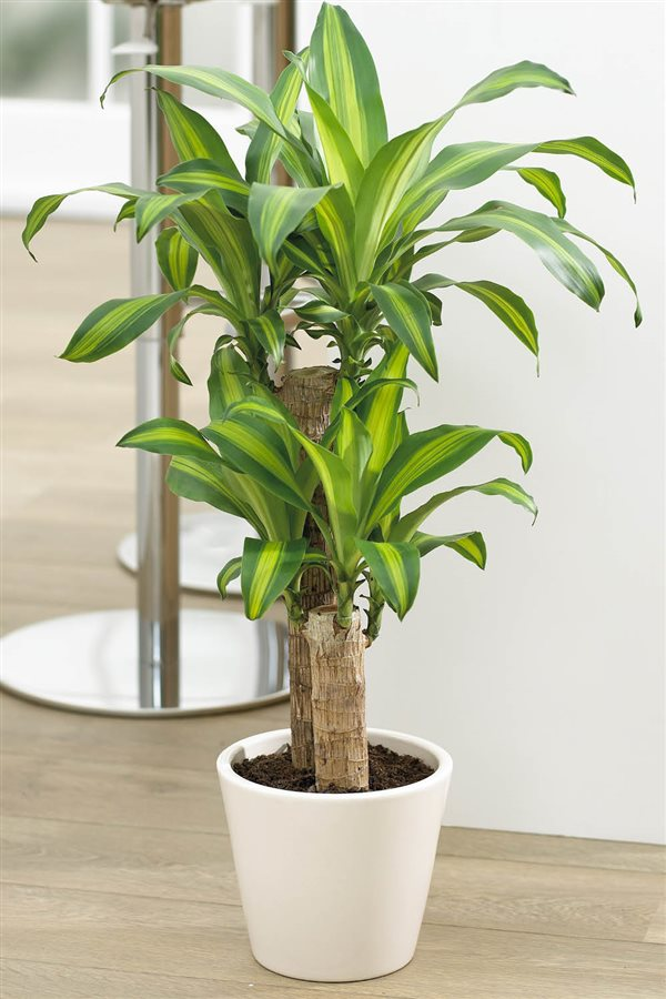 20 plantas de interior resistentes aptas para negados for Cuales son las plantas para interiores
