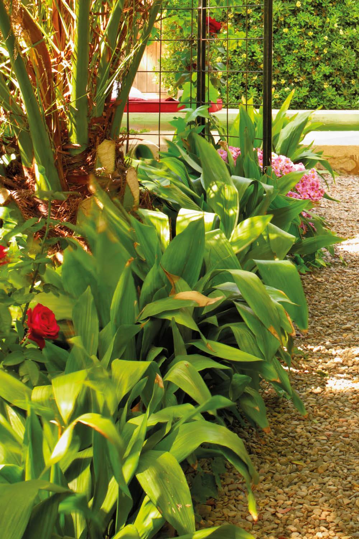 25 plantas de exterior resistentes aptas para negados - Plantas verdes exterior ...