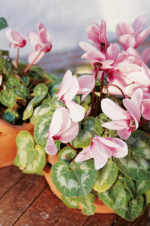 Plantas De Exterior Para Que Tu Balcon O Terraza Parezcan Un Jardin