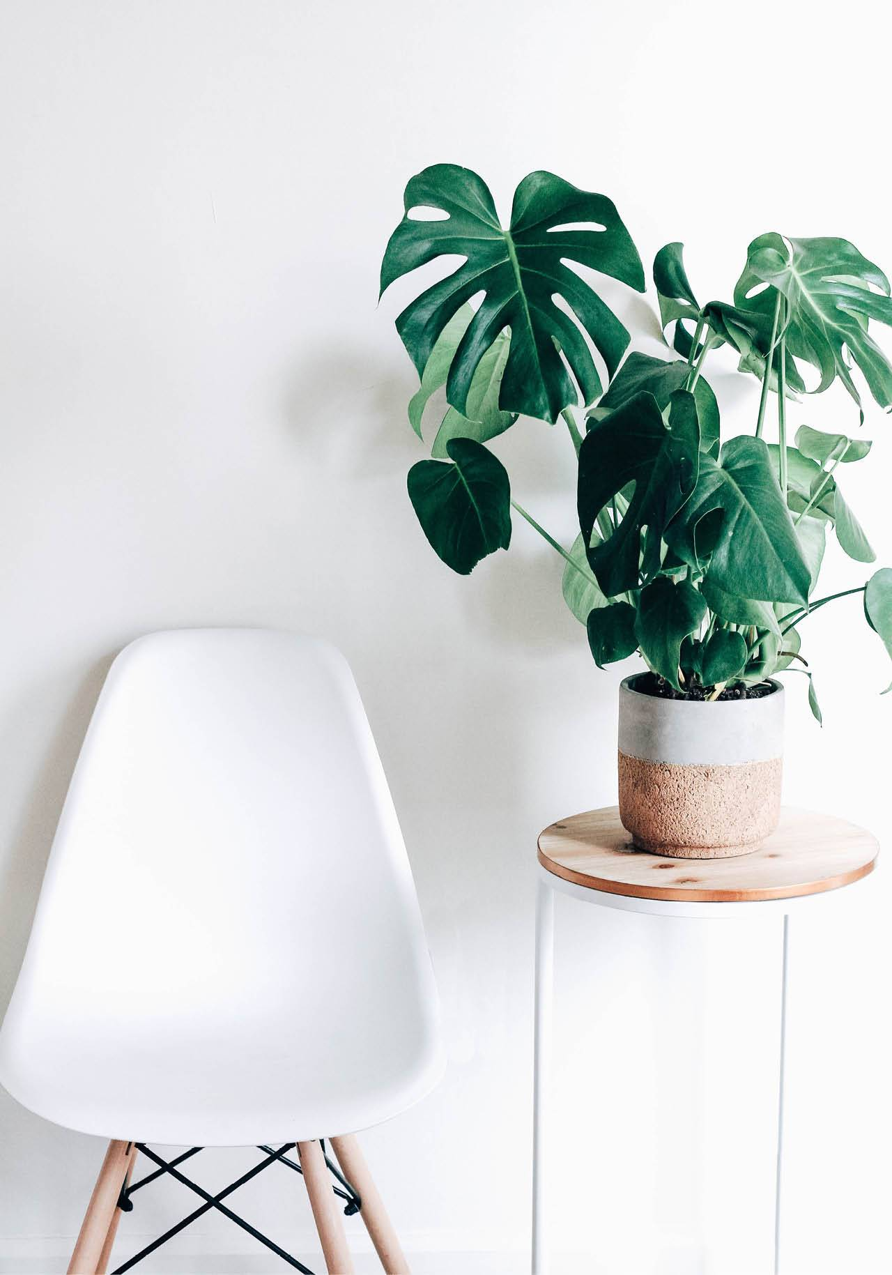 plantas de interior poca luz monstera